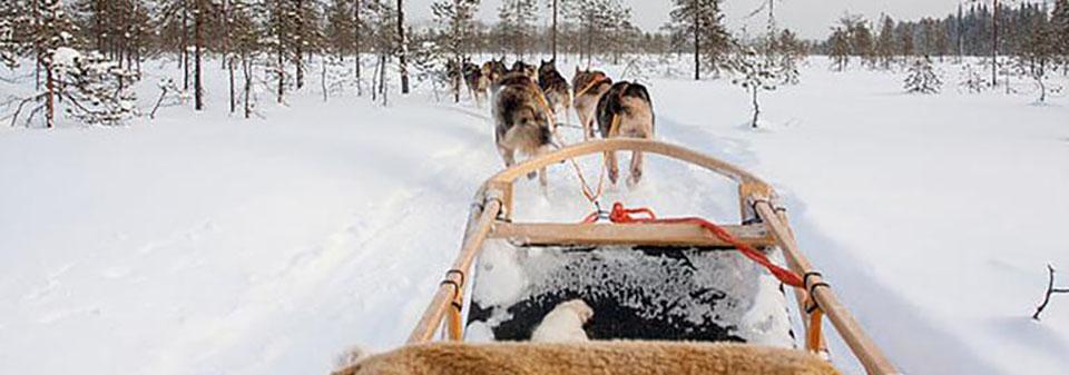 Geyik Turları Laponya