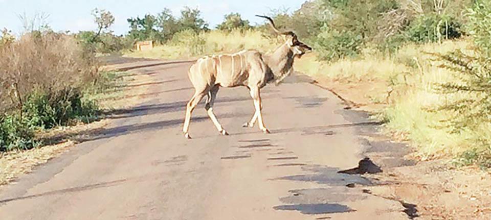 Güney Afrika Safari Turu Fotoğraflar
