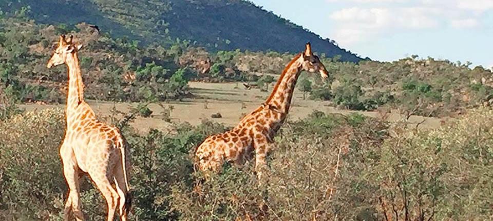 Güney Afrika Safari Turu Fotoğrafları