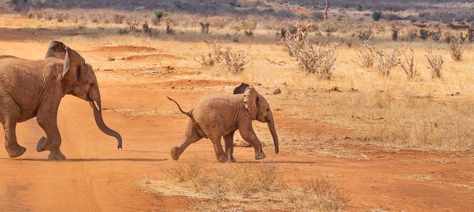 kenya safari turları fotoğrafı